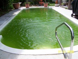 Nước bể bơi bị rêu tảo bám